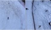 شاهد.. مطاردة مثيرة بين دب ومتزلج على منحدر ثلجي