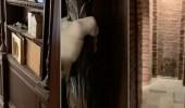 """بالفيديو .. شاب يصدم متابعيه على """"تيك توك"""" بغرفة سرية بمنزله"""