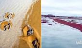 بالفيديو.. مشاهد مذهلة لتجمد المياه والثلوج في طريف وعلقان