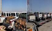 بالفيديو.. ضبط 2.3 طن حطب محلي بحوزة 41 مخالف في مناطق المملكة