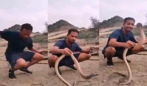 """بالفيديو..مروض ثعابين يتعرض للدغ أثناء مداعبة """" كوبرا """" بجازان"""