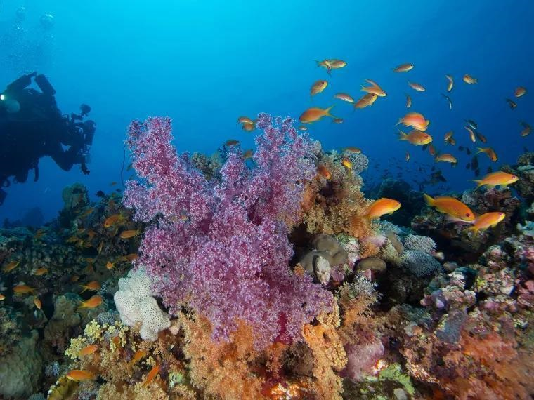 جزيرة البريدي بينبع وجهة بحرية مرجانية ساحرة