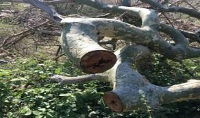 البيئة تتوعد قاطع أشجار الليث بالملاحقة والغرامة المالية