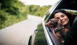 إرشادات يجب مراعاتها عند اصطحاب الحيوانات الأليفة في السيارة