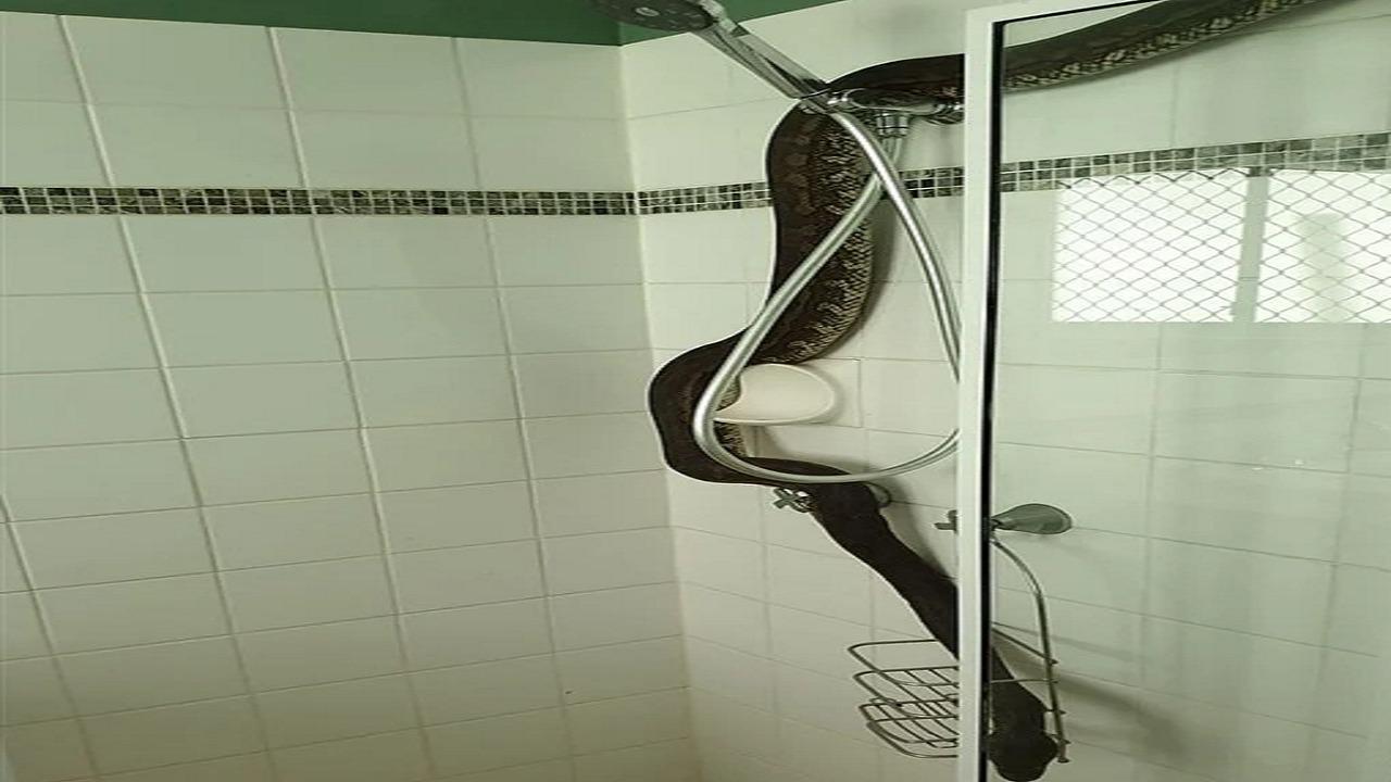 بالصور.. ثعبان ضخم يظهر لإمرأة فجأة أثناء الإستحمام