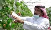 شاهد .. مواطن يزرع فراولة بدون تربة في الرياض