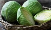 فوائد تناول الكرنب في فصل الشتاء