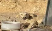 الكشف عن حقيقة اغتصاب كلب الرياض