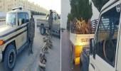 بالفيديو.. ضبط 9 طن حطب محلي معروض للبيع في عدة مناطق