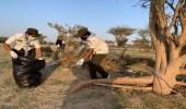 كشافة تعليم ينبع تستزرع 250 شجرة مانجروف