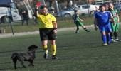 بالصور.. استخدام البطاقة الحمراء في وجه كلب لطرده من مباراة