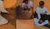 بالفيديو..أسامة الدغيري يداعب نمرًا ودبًا مفترسين ببريدة