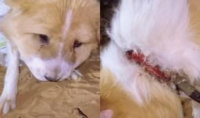 بالفيديو.. لحظة إنقاذ كلب رُبط من رقبته بطريقة وحشية بالرياض