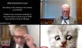 فيديو طريف لمحامي يتحدث للقاضي: هل تسمعني.. أنا لست قطة !!
