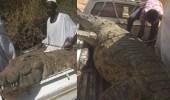 بالفيديو.. مزارع خمسيني يصطاد تمساحًا عملاقًا التهم شخصَيْن