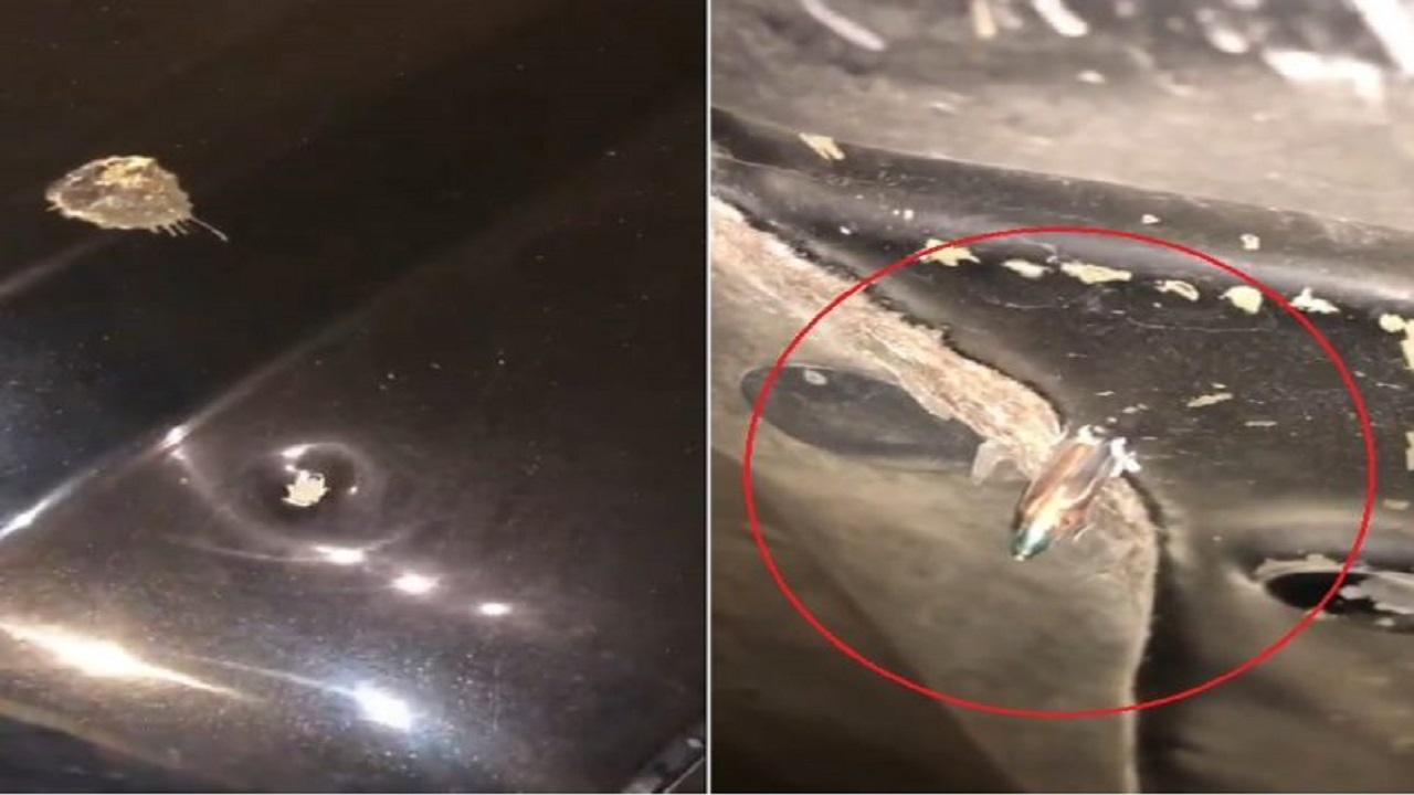 بالفيديو.. اختراق رصاصة طائشة لمركبة مواطن بحي المونسية