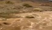 شاهد.. لحظة تدفق مياه السيول في عسير