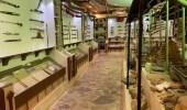 بالصور.. عائلة في أملج تحتفظ بعظام ديناصور وقطع تراثية نادرة