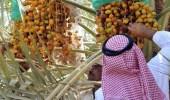 927 مليون ريال صادرات سعودية من التمور إلى 107 دولة حول العالم
