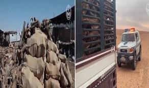 بالفيديو.. ضبط 8 طن حطب محلي معروض للبيع في عدة مناطق