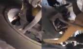 بالفيديو.. مواطن يفاجأ بضب مختبئ داخل مركبته ويطالبه بالخروج بطريقة طريفة