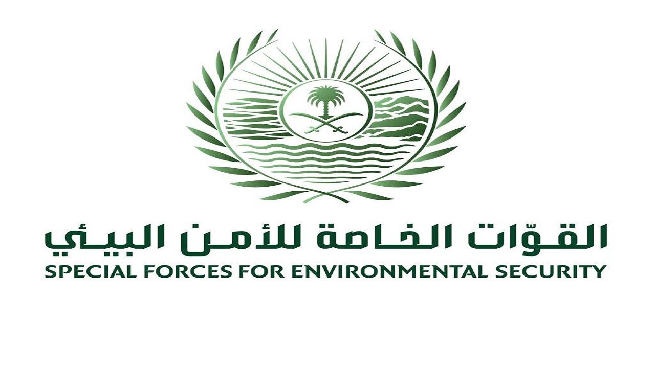 إطلاق عدد من الظباء في محمية الملك سلمان الملكية والأمن البيئي يحذر من صيدها