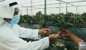 بالفيديو.. مزرعة مائية في القطيف تفتح أبوابها لزوار وسكان المنطقة الشرقية