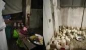 بالفيديو.. ضبط مسلخ عشوائي مخالف داخل شقة سكنية تديرها عمالة مخالفة بالعاصمة المقدسة