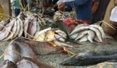 عقوبة مخالفة حظر صيد أسماك الناجل والطرادي
