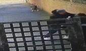 بالفيديو.. رجل يضرب امرأة حامل بشكل عنيف