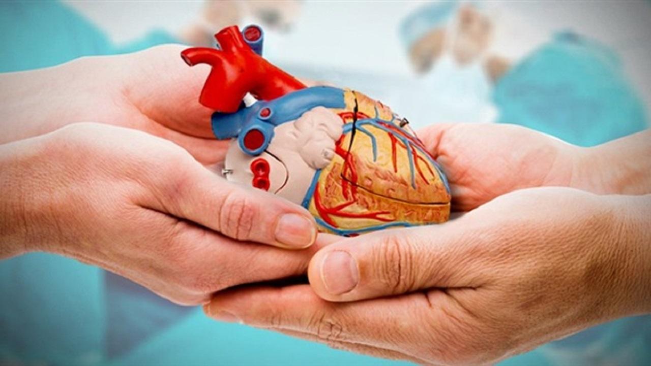 بعد الموافقة عليه.. أبرز أهداف نظام التبرع بالأعضاء البشرية