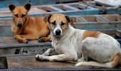 طرق خفض حوادث هجوم الكلاب الضالة