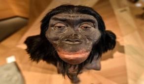 دراسة حديثة: دماغ الإنسان قبل مليون عام تشبه دماغ القردة