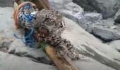 حقيقة فيديو صيد النمر النادر في إحدى مناطق المملكة