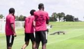بالفيديو.. تمساح يظهر فجأة للاعبي فريق كرة قدم أثناء التدريبات