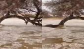 «فيديو» يظهر السيول والبرد في سوق عكاظ بالطائف