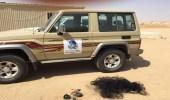 الحياة الفطرية تعلق على حادثة افتراس أسد لصاحبه في الرياض