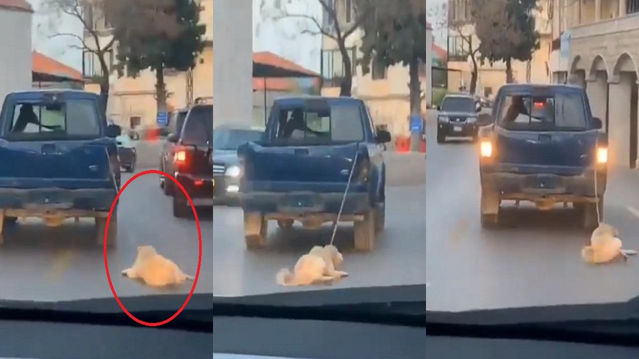 مقطع مروع لسائق ربط كلب بسيارته وسحله