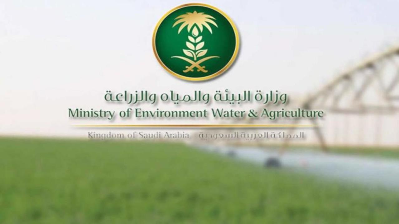 وزارة البيئة تدعو 52 متقدمًا للمقابلة الشخصية ومطابقة بياناتهم