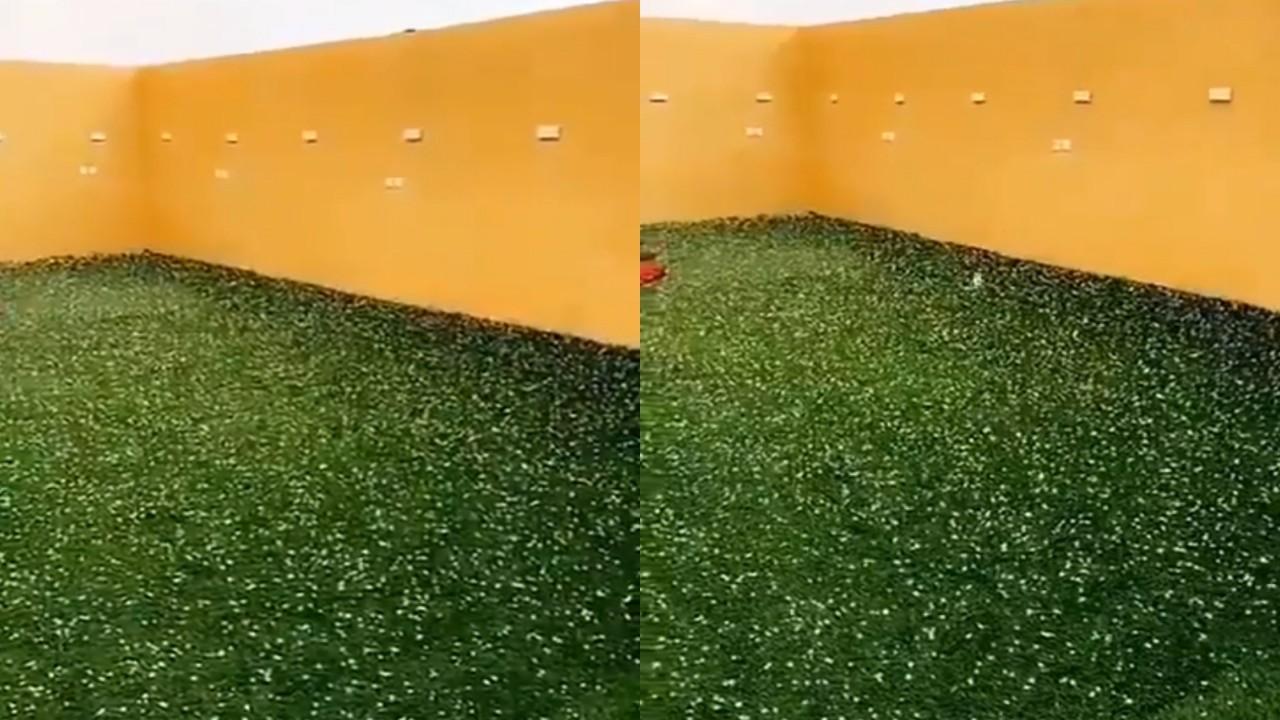 بالفيديو.. لحظة سقوط البرد على حفر الباطن
