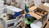 بالفيديو.. ضبط مستودع لإعادة تعبئة الأغذية الفاسدة وبيعها بالأسواق