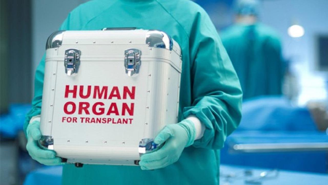 عقوبات رادعة لمخالفي نظام التبرع بالأعضاء البشرية