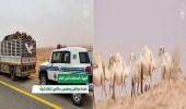 بالفيديو.. الإطاحة بـ 27 مخالف لنظام الأمن البيئي في عدة مناطق