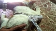 """بالفيديو.. القبض على """" قط """" يهرب المخدرات إلى المساجين"""