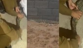 """بالفيديو.. السيطرة على """"تمساح"""" ظهر في مركز الهدية ببريدة وتسلميه للحياة الفطرية"""
