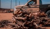 بالفيديو .. ضبط 84 مخالفًا لنظام البيئة في عدد من مناطق المملكة