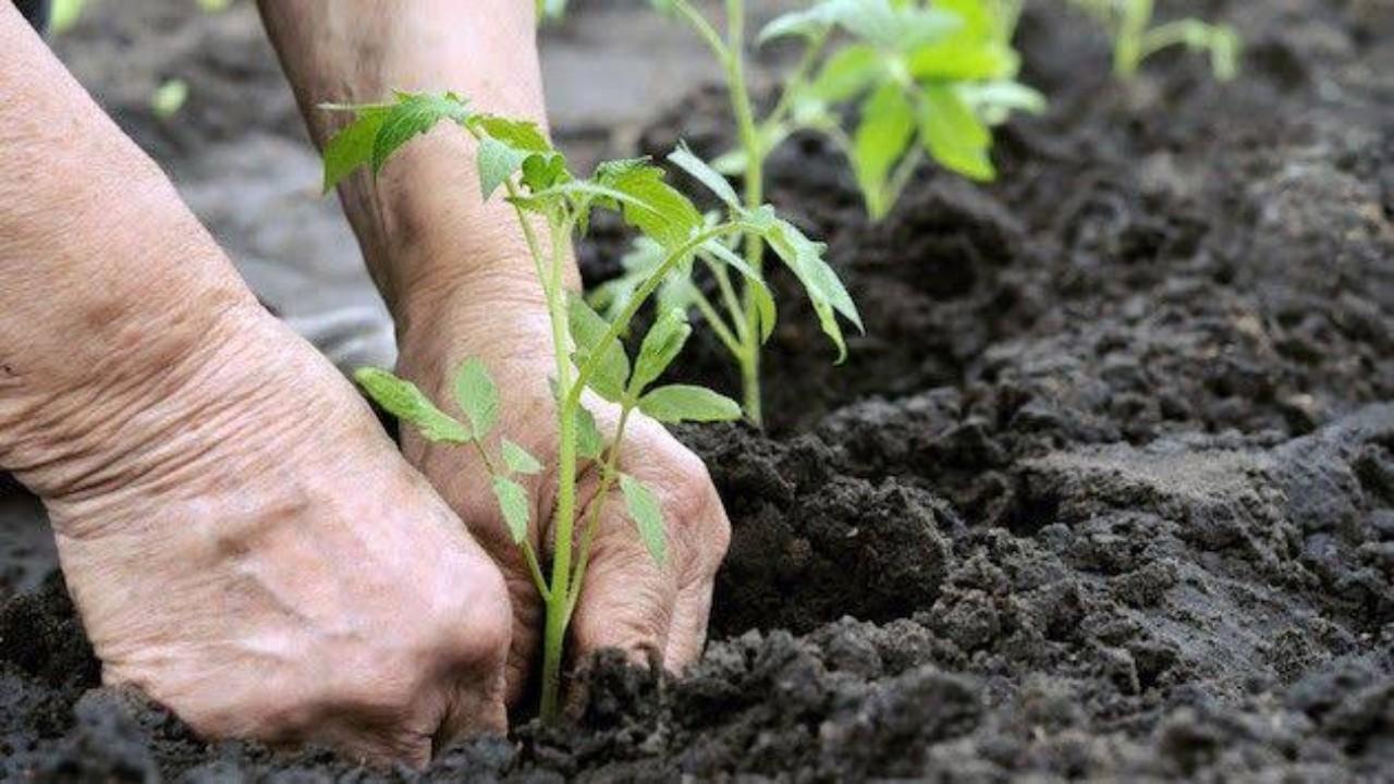 عقوبات ضد مخالفي نظام الزراعة العضوية تصل إلى مليون ريال