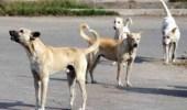 بالفيديو .. تفاصيل جديدة حول الطفل المتوفي بسبب كلاب ضالة في شاطئ العقير