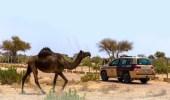 رصد 225 مخالفة لنظام البيئة في الرياض