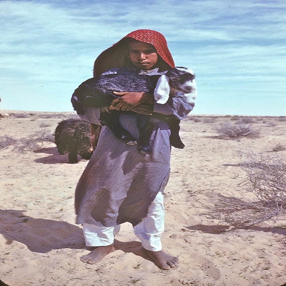 صورة لطيفة لصبي يحمل ماعزًا غرب بقيق